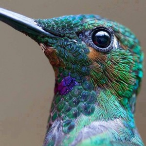 Tips to Organize Your Hummingbird Mind by Wendy Strain with photo by Imgur